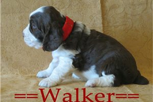 Picture of Walker