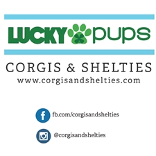 View full profile for Lucky Pups