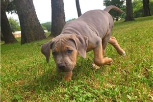 Picture of Biggie