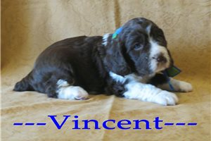 Picture of Vincent