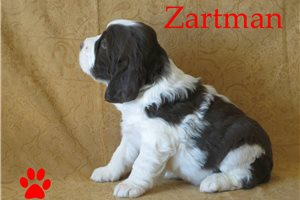 Picture of Zartman