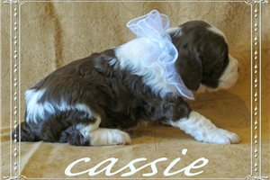 Picture of Cassie