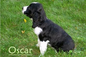Picture of Oscar