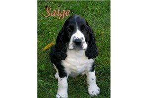 Picture of Saige