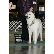 View full profile for Glacier Creek Kuvasz