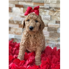 View full profile for The Mejia'S Puppy Love