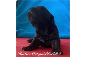 Picture of Hudson