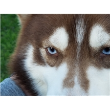 View full profile for Siberian Instincts