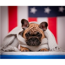 View full profile for Frenchbull-Dogs
