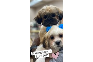 Upcoming M - Shichon for sale