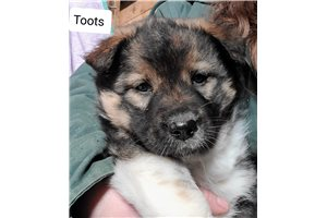 Picture of Toots