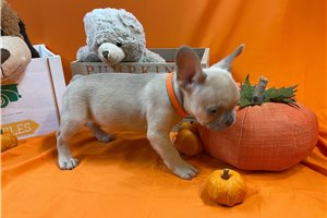 Picture of Sweet Orange