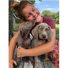 View full profile for Shockley Puppies