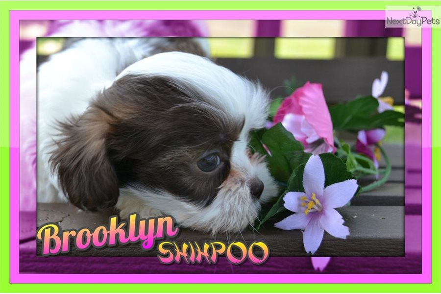 In Home Dog Grooming Brooklyn