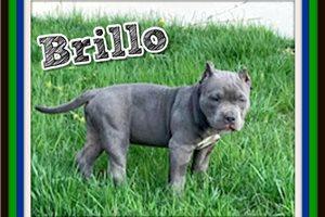 Picture of Brillo
