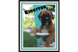 Picture of Kingston