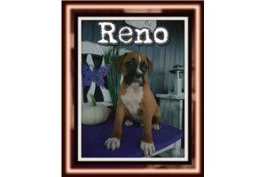 Picture of Reno