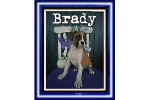 Picture of Brady