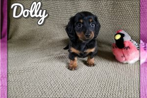 Picture of Dolly