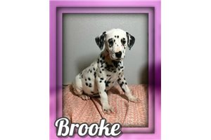 Picture of Brooke