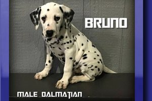 Picture of Bruno