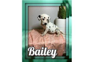 Picture of Bailey
