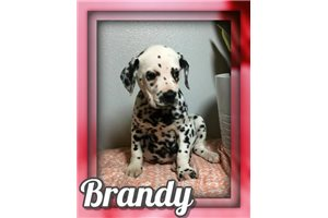 Picture of Brandy