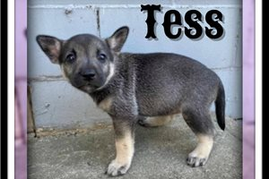 Picture of Tess
