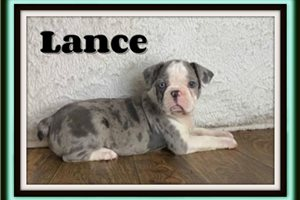 Picture of Lance