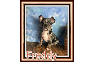 Picture of Freddy