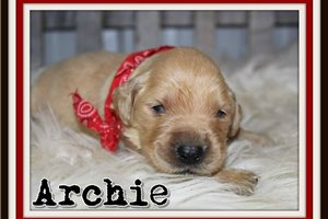 Picture of Archie
