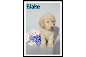 Picture of Blake