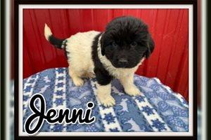Picture of Jenni