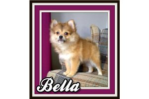 Picture of Bella