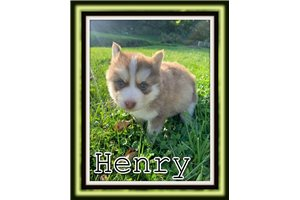Picture of Henry