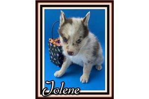 Picture of Jolene