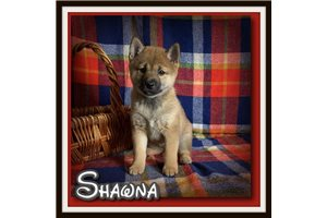Picture of Shawna