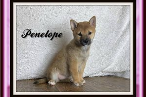 Picture of Penelope