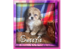 Picture of Sweetie