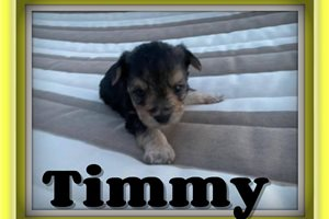 Picture of Timmy