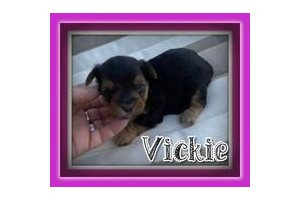 Picture of Vickie