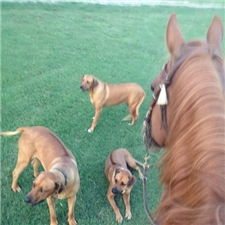 View full profile for River Run Ridgebacks  & River Run Terriers