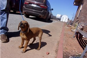 Picture of AKC girl
