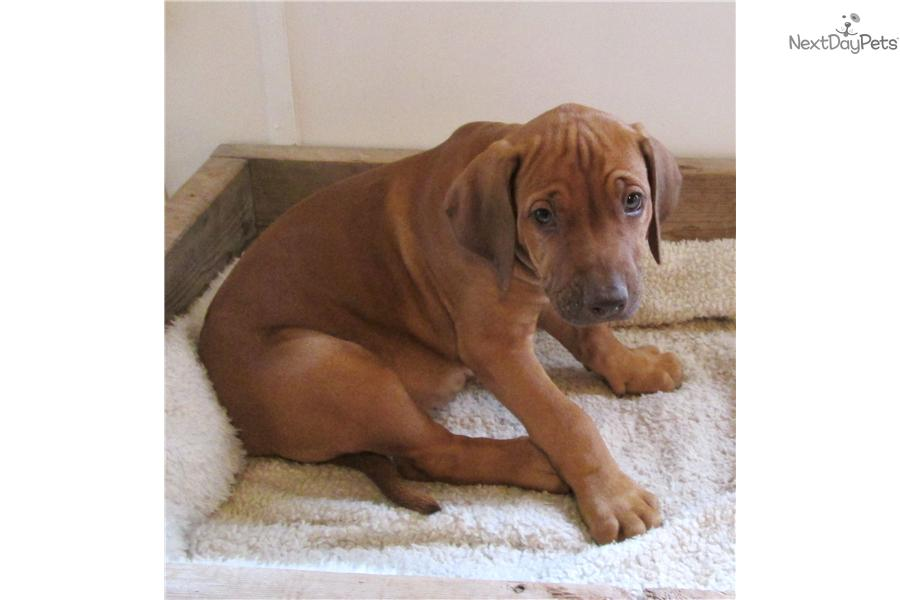 Corpus Christi Pets Craigslist Search Results Bcitc Org