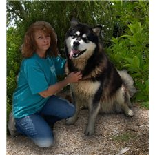 View full profile for Candyrock's Alaskan Malamutes