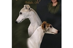 Featured Breeder of Whippets with Puppies For Sale
