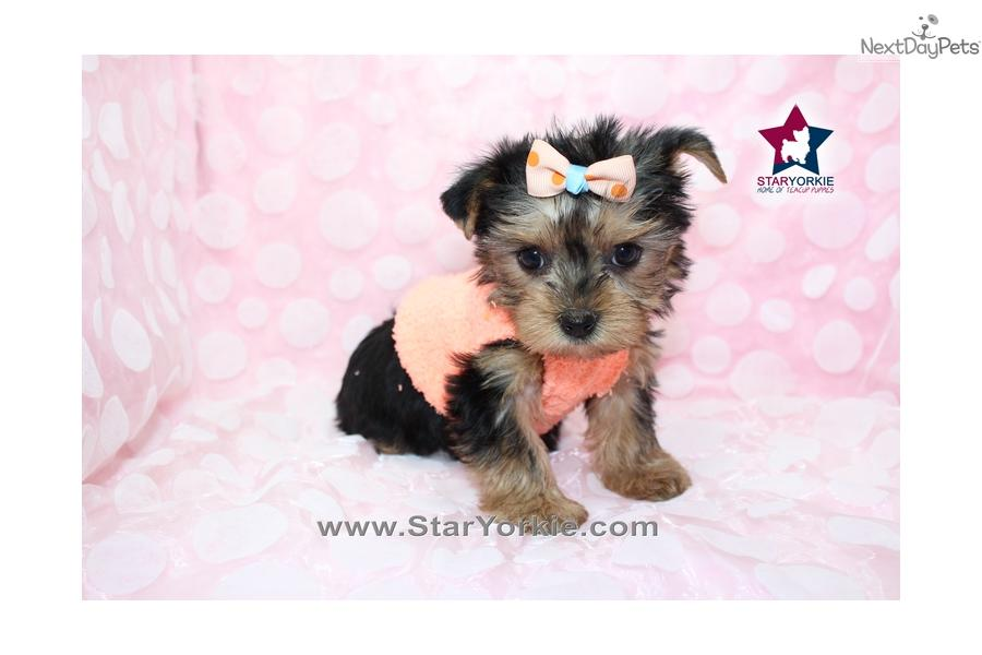 Dogs And Puppies For Sale And Adoption Oodle Marketplace