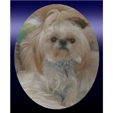 View full profile for Barbie's Shih-Tzu