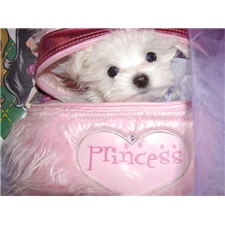 View full profile for Princess Pet Rainbow Sugar Babies