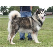 View full profile for Lone Star Alaskan Malamutes